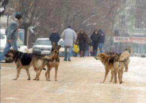 Вокруг дома бегают собаки куда обращаться